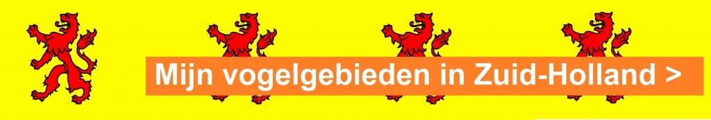 vlag zuidholland
