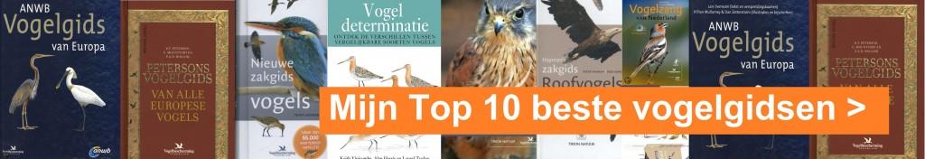 banner top 10 de allerlaatste