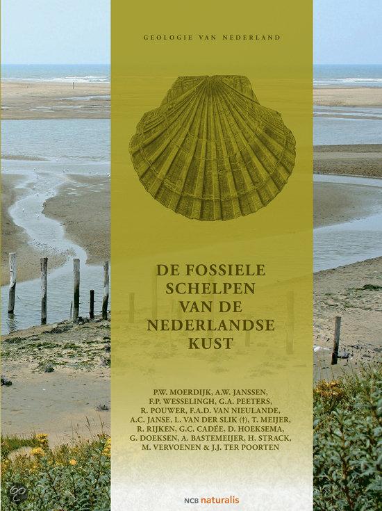 De fossiele schelpen van de Nederlandse kust
