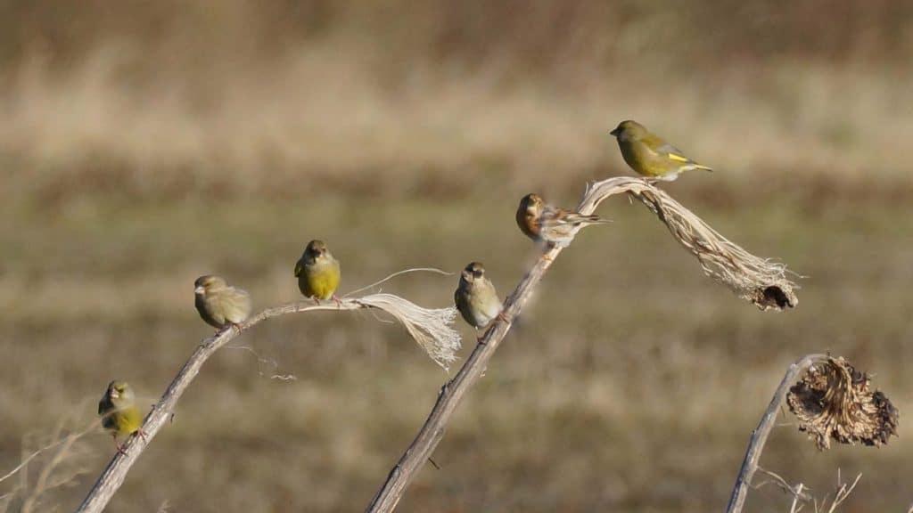 vogelakker