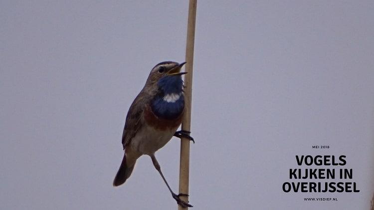 Vogels kijken in Overijssel