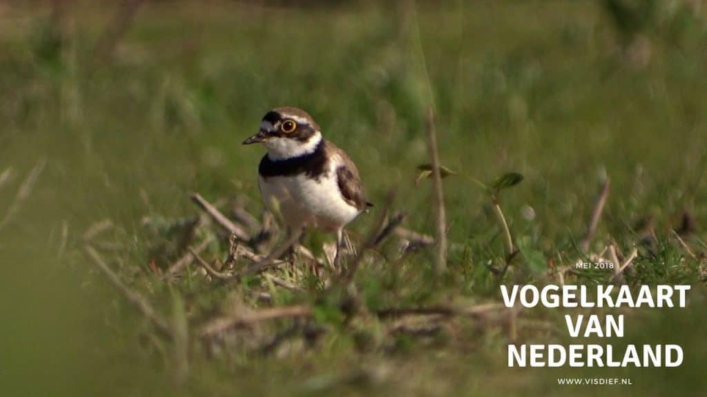 vogelkaart van nederland