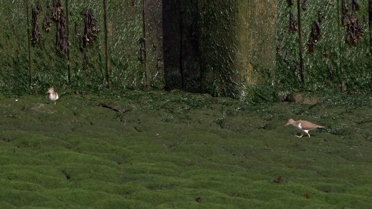 oeverlopers op de stenen glooiing europoort maasvlakte